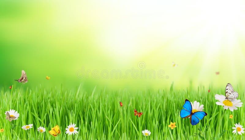 Download Луг весны стоковое фото. изображение насчитывающей blooping - 37931152