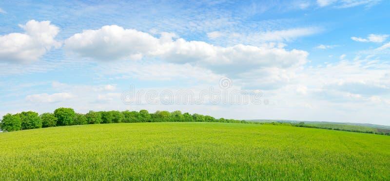 Луг весны стоковая фотография rf