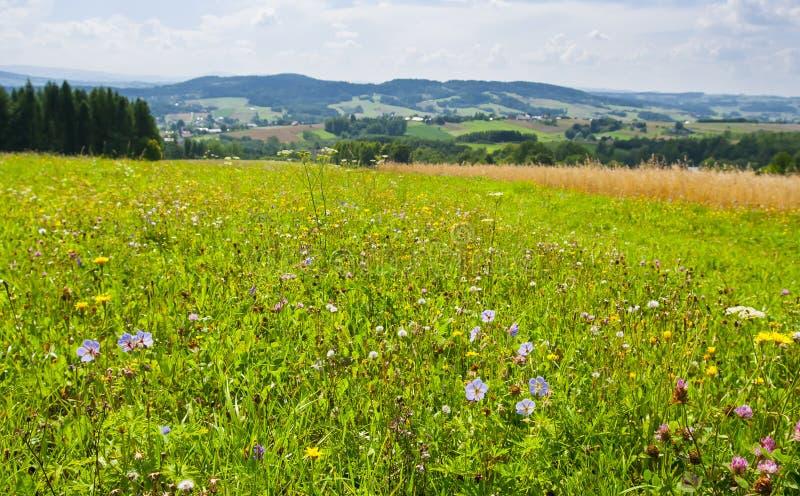 Луг вполне цветков в Польше с горами на заднем плане стоковые фото