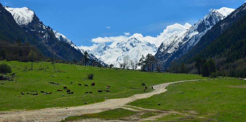 Луг в горах стоковое изображение rf