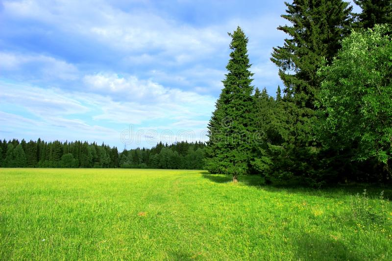 Луг в лесе стоковое изображение rf