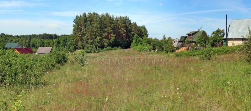 Луг в июле типичного Lithuanian травянистый цветя стоковое изображение rf