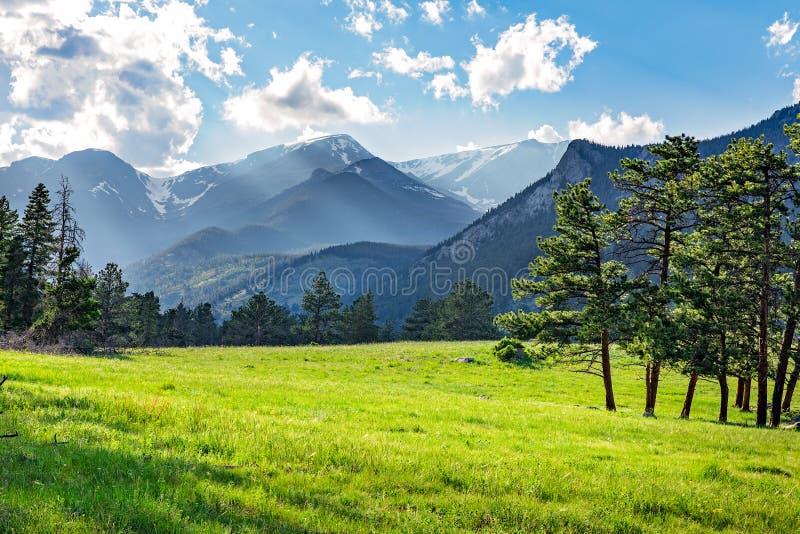 Луг в национальном парке скалистой горы стоковые фотографии rf