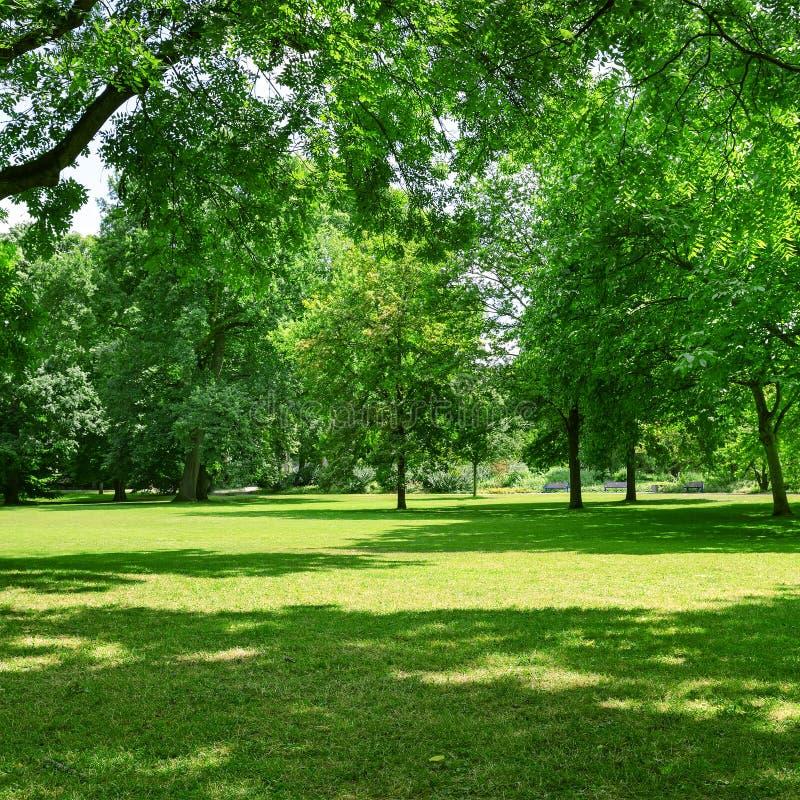 луг в парке стоковая фотография