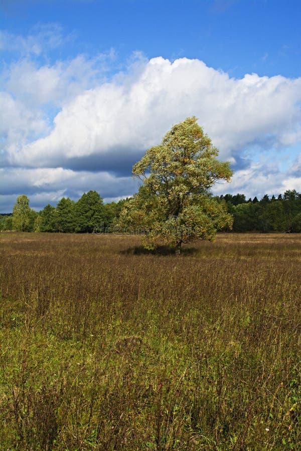 Луг, деревья и небо в восхитительном свете _6 стоковые фотографии rf