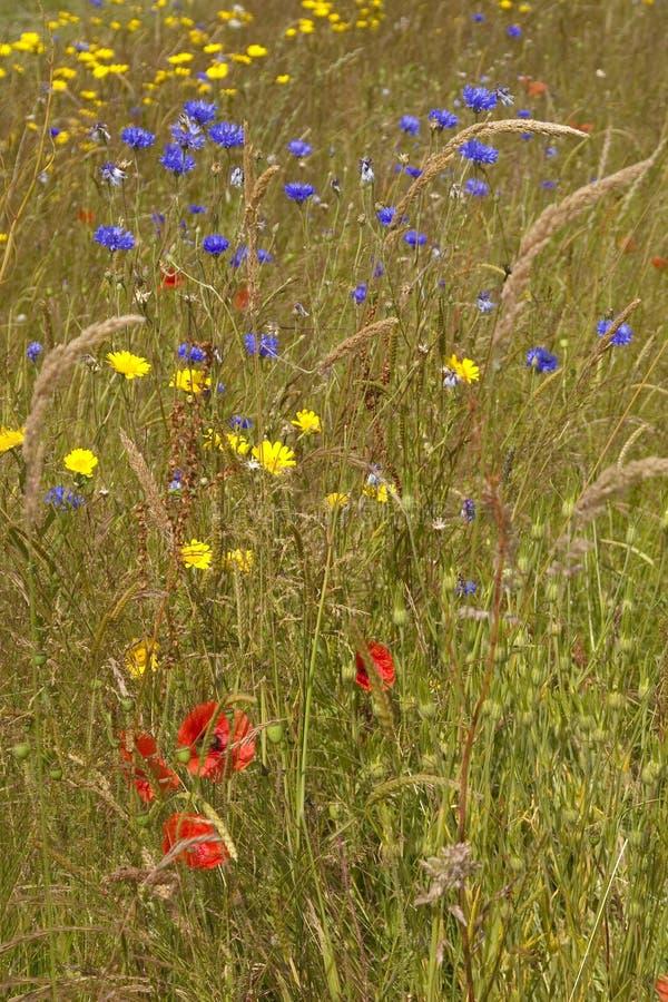 Луг лета - цветки wilde стоковая фотография