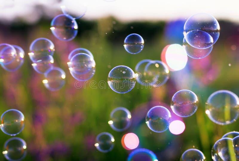 Луг зеленого цвета лета ясный с пузырями мыла ярко shimmer и лететь в воздух на заходе солнца стоковая фотография