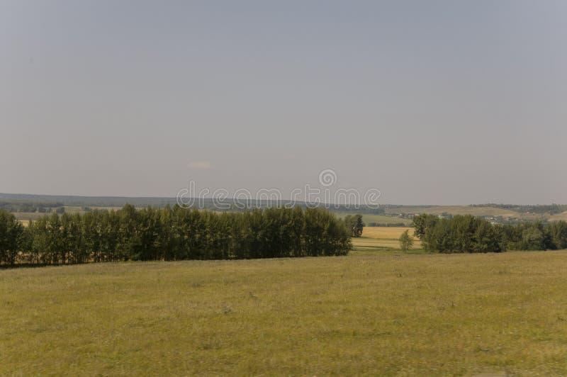 Луг золота с зелеными деревьями далекими и голубым небом Спокойное лето Обрабатываемая площадь Сельское хозяйство Погода желтой т стоковая фотография