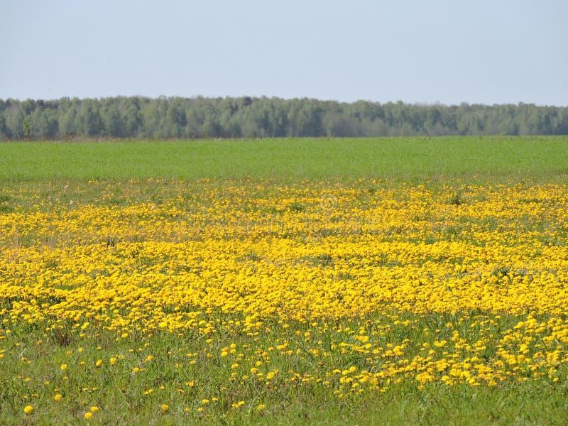 Луг, литовский ландшафт весны стоковая фотография rf