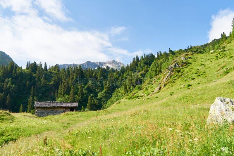 Луг на высокогорном выгоне в Альп с хижиной горы стоковые фото