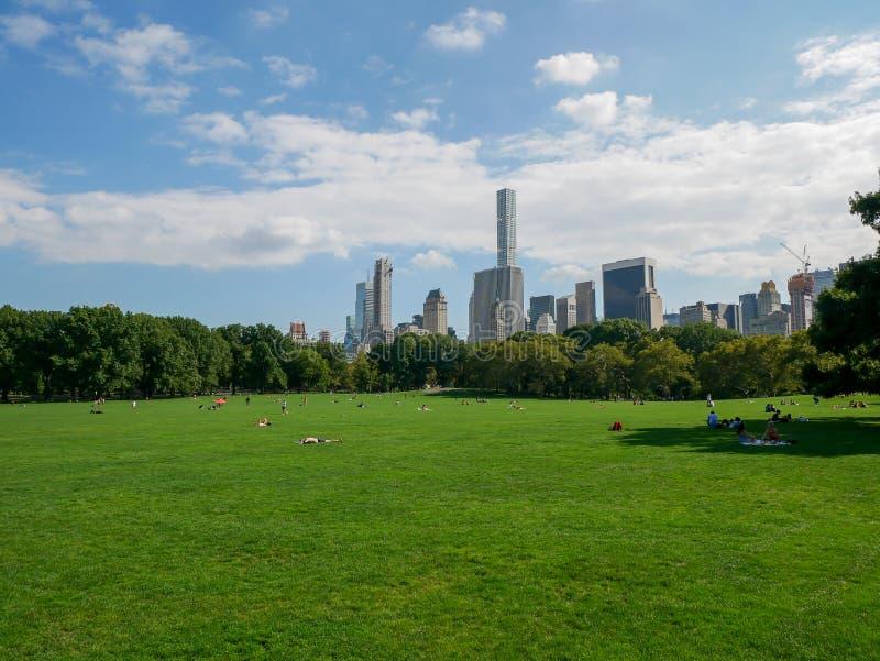 Луг овец в Central Park с людьми стоковое изображение rf
