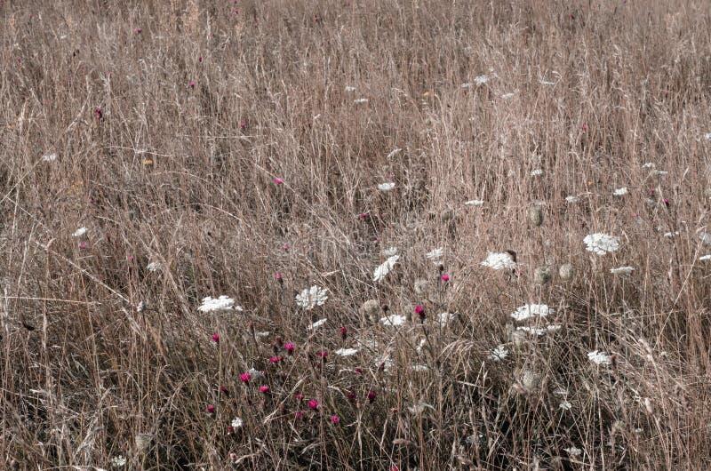 Луг одичалой травы с цветками стоковое изображение