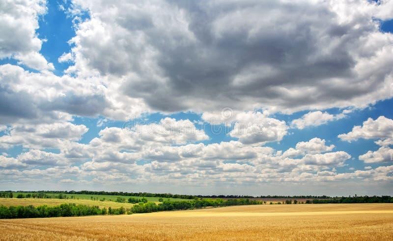 Луг пшеницы и пасмурного голубого неба стоковые фотографии rf
