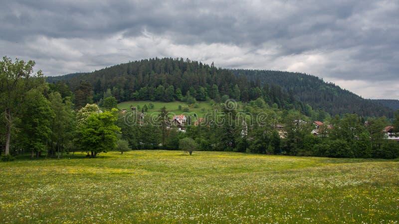 Луг с лесом и облачным небом стоковые фото