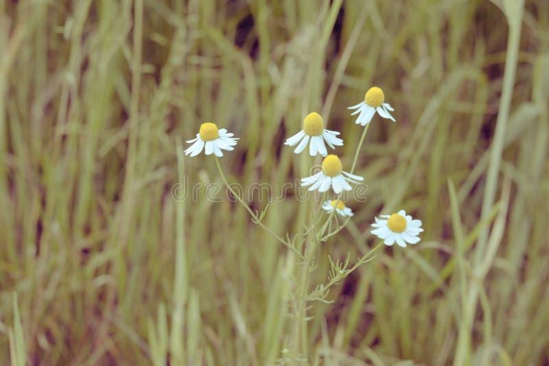 Луг с стоцветом стоковые фото
