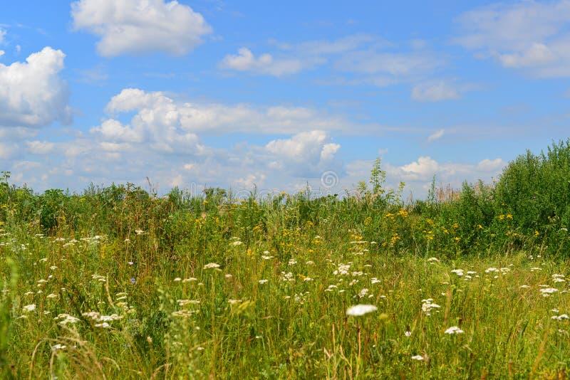 Луг с wildflowers на солнечный день в июле стоковые изображения