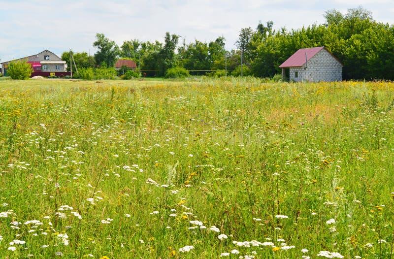 Луг с wildflowers на солнечный день в июле стоковое фото rf