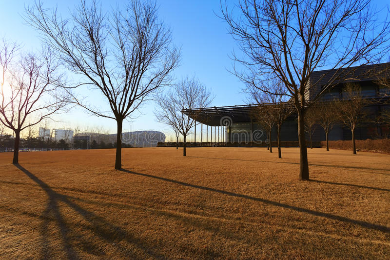 Лужайка вне национального стадиона стоковые изображения rf