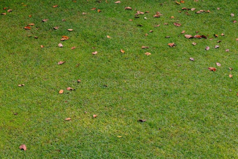 Лужайка зеленого цвета Natrual, с сухими листьями стоковые изображения rf