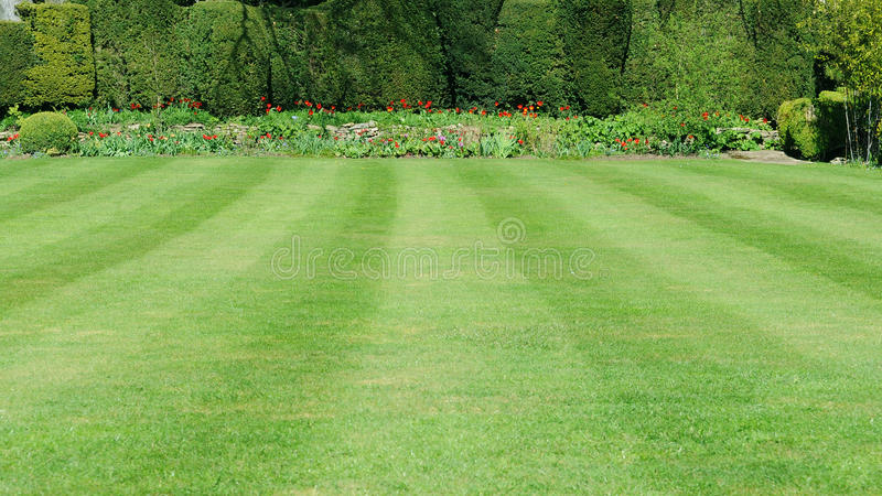 Лужайка сада стоковые фото