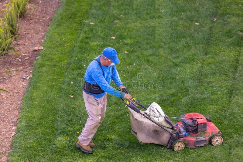 Лужайка садовника кося в утре стоковые изображения rf