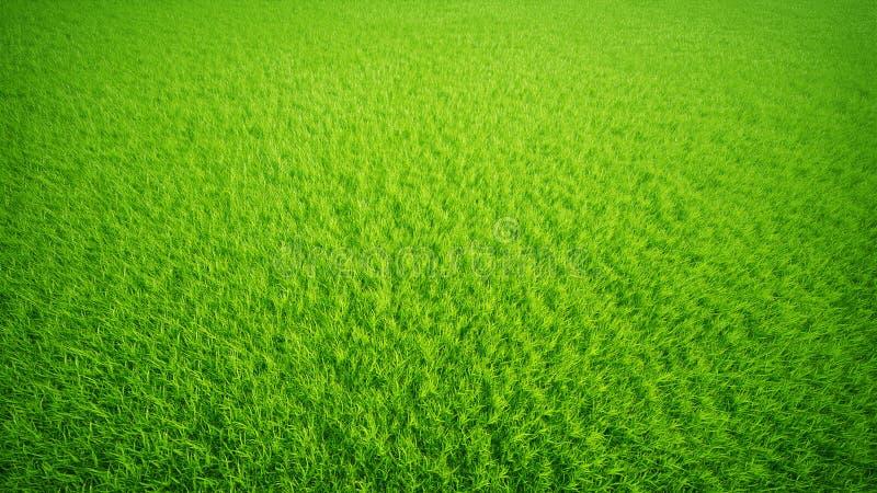 лужайка травы стоковое изображение