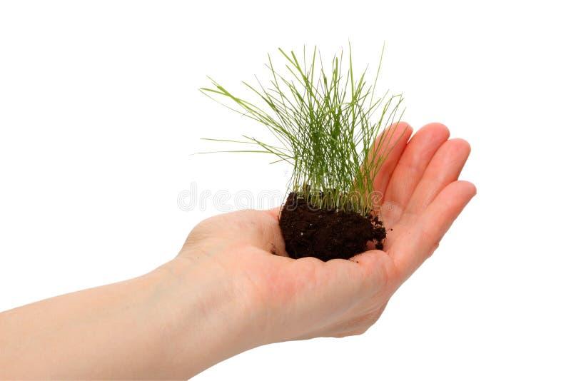 лужайка человека руки травы стоковая фотография rf