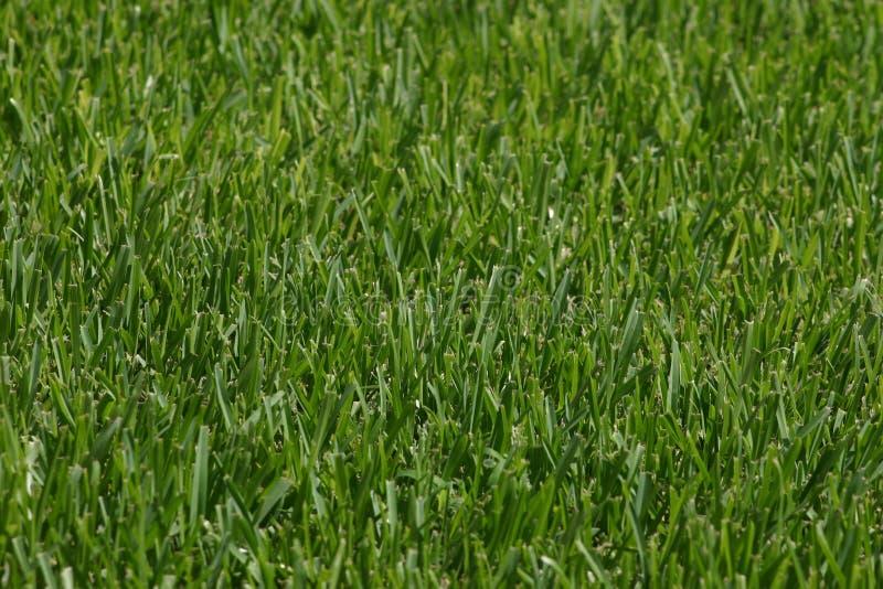 лужайка Стоковые Фото