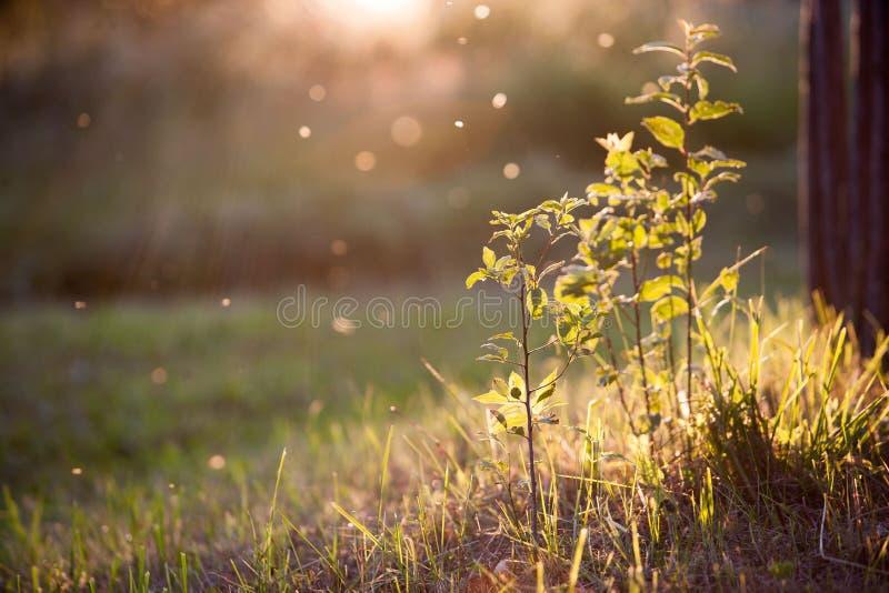Лужайка стоковое фото rf