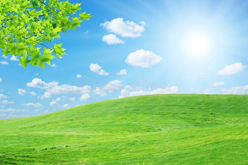 Лужайка Sun стоковое изображение