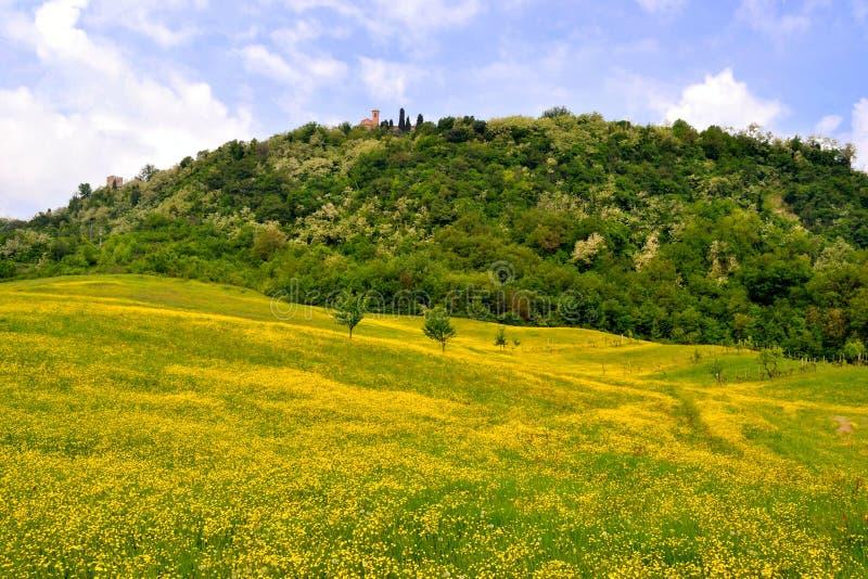 лужки холмов цветка стоковая фотография rf
