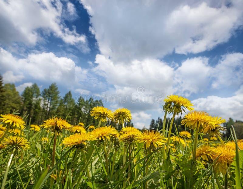 Download Лужок весны стоковое изображение. изображение насчитывающей страна - 40580797