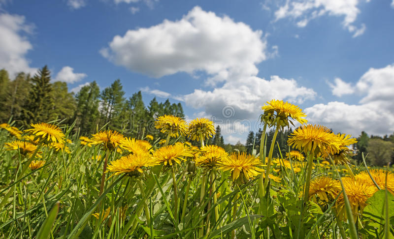 Download Лужок весны стоковое изображение. изображение насчитывающей трава - 40580833