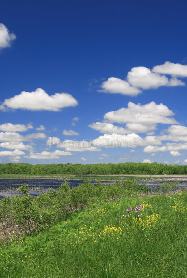 лужок ландшафта озера стоковое фото