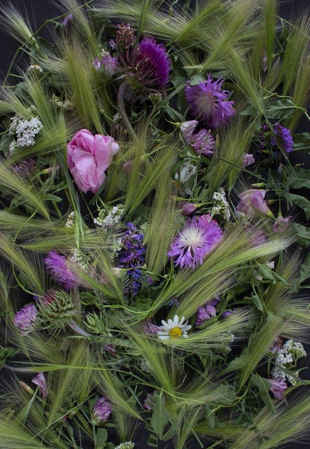 Лужок цветет предпосылка стоковые фотографии rf