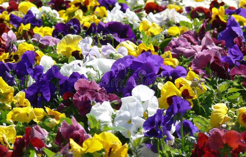 лужок цветка стоковое изображение rf
