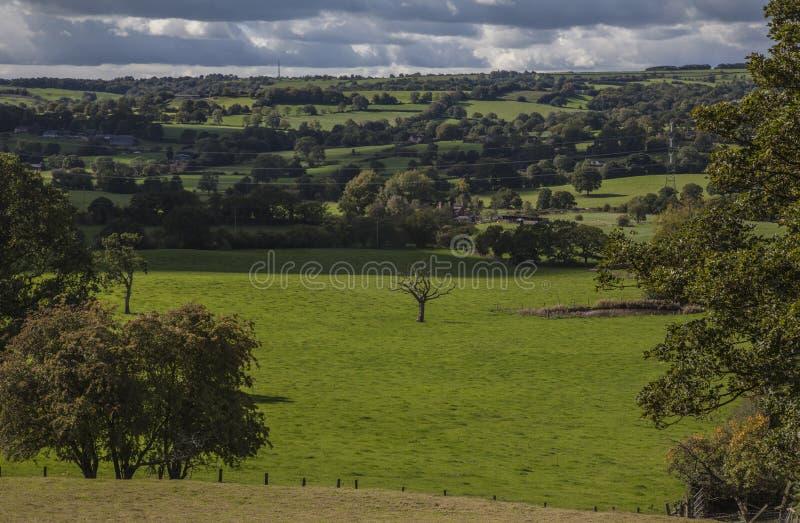Лук-порей, Англия, Великобритания - поля и луга, сентябрь 2018 стоковая фотография