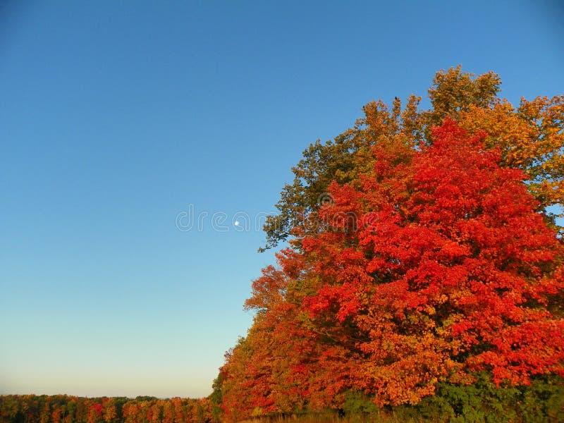 Луна в после полудня среди tree& x27; цвета падения s полностью стоковые изображения