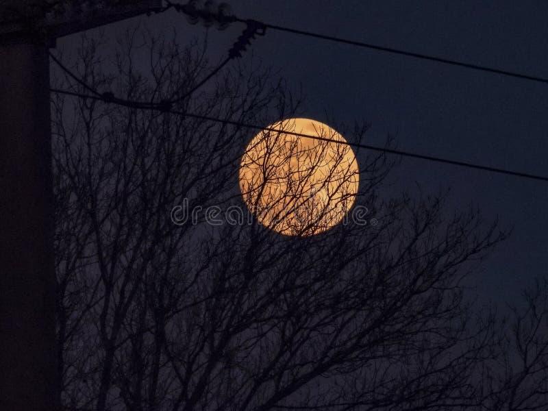 Луна за деревьями на заходе солнца стоковая фотография rf