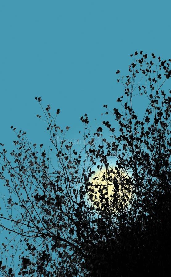 Луна за листьями абстрактная иллюстрация предпосылки стоковая фотография rf