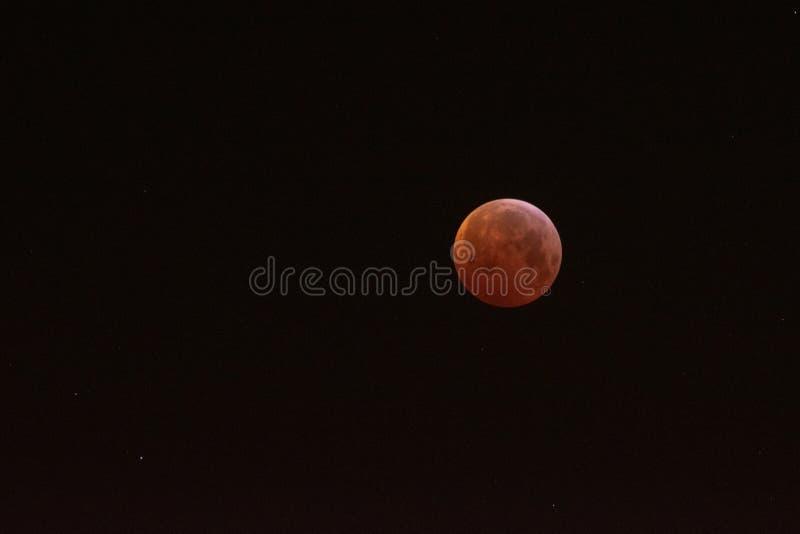 Луна крови волка стоковое изображение rf