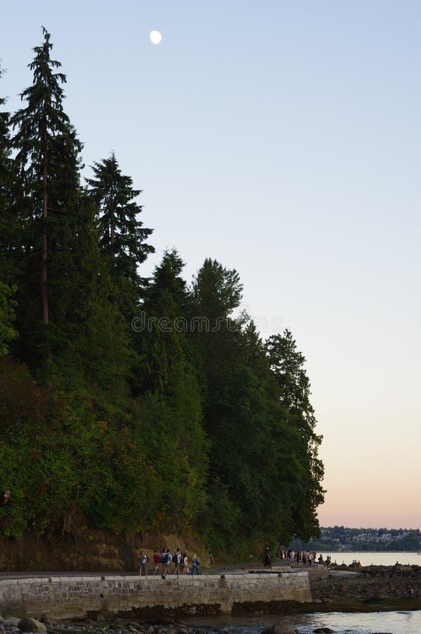 Луна над парком Стэнли стоковое изображение rf