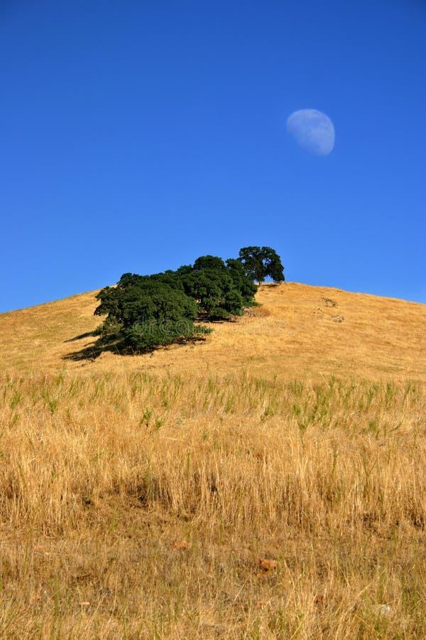 луна поля стоковое фото