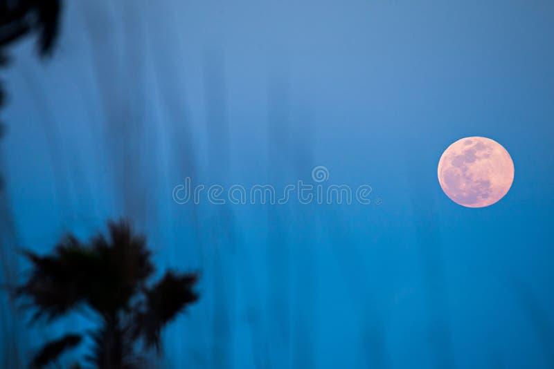 Луна поднимая над пальмами на пляже стоковое фото rf
