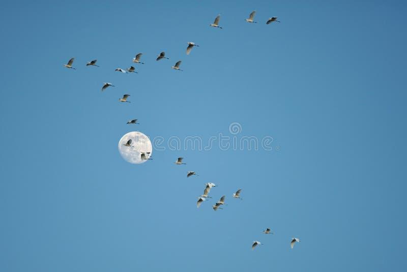 луна птиц стоковое фото rf