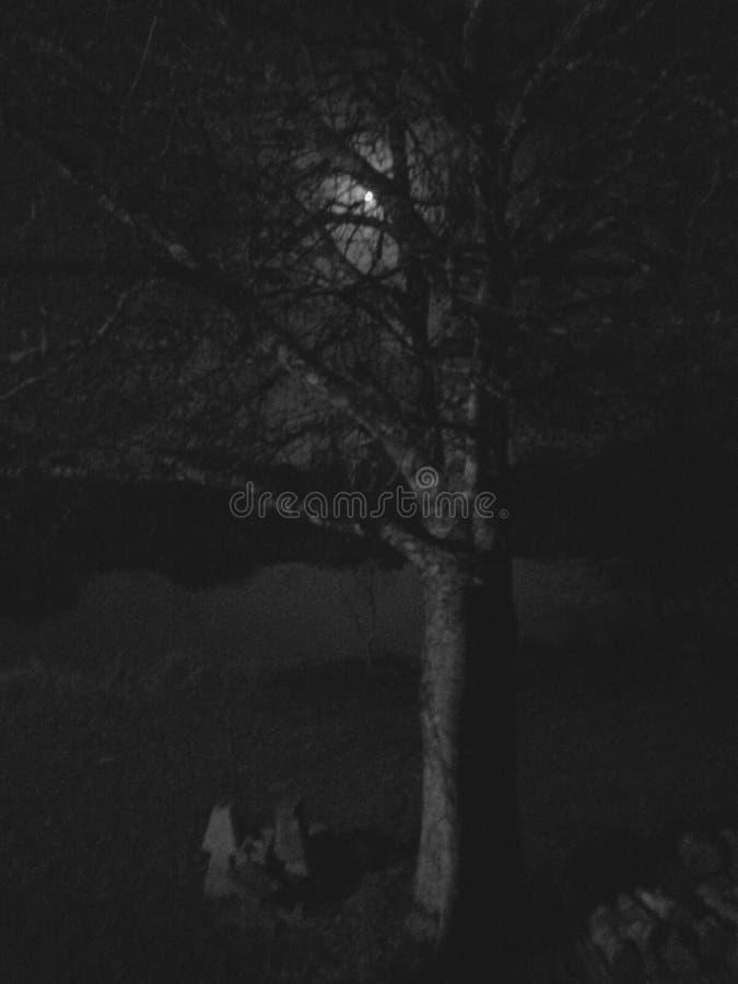 Лунный свет peeking до конца стоковое фото rf
