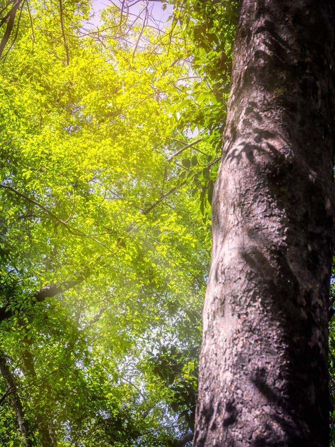 Лучи блесков солнца стоковая фотография