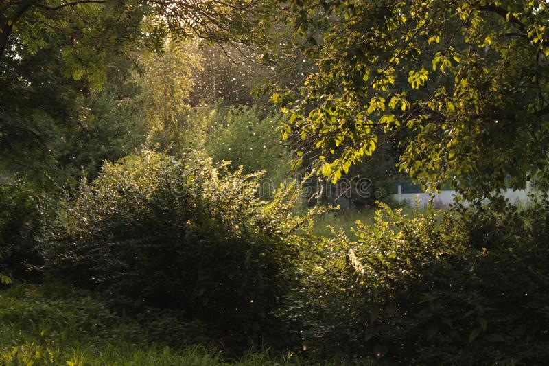 Лучи света за деревьями в парке стоковое фото