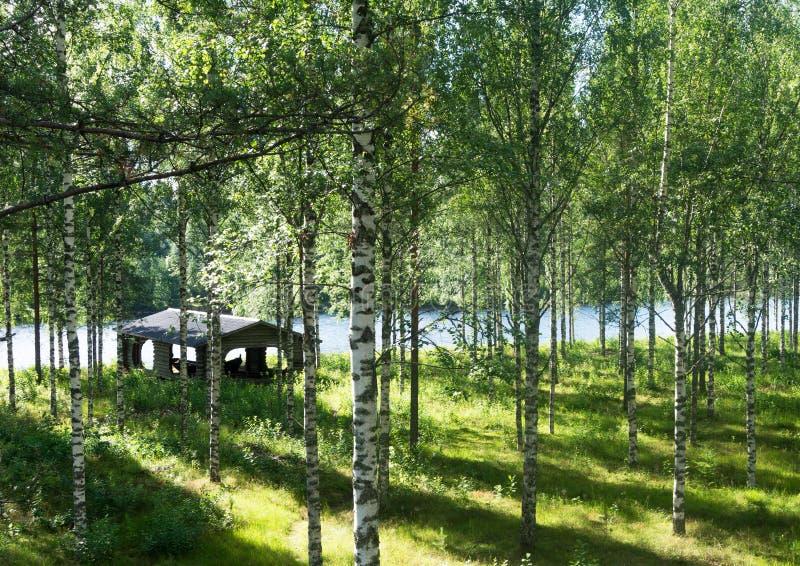 Лучи солнечного света в роще березы около реки стоковое изображение