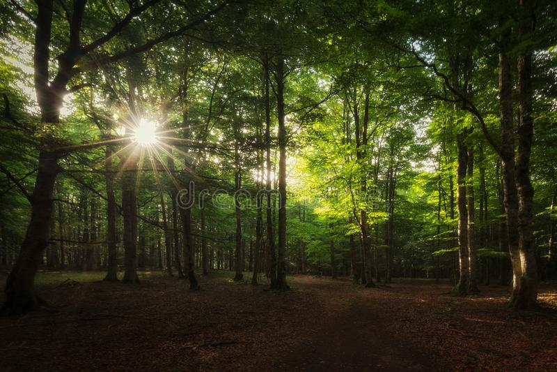 Лучи Солнца между деревьями в лесе Urbasa стоковая фотография rf